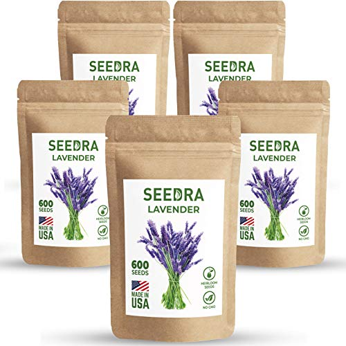 SEEDRA English Lavender Seeds for Indoor and Outdoor Planting - 3000 Seeds/2,5 g - GMO-Free and Heirloom Seeds - Germination Above 90% - 5 Pack