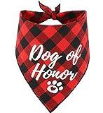 JPB Dog of Honor Dog
