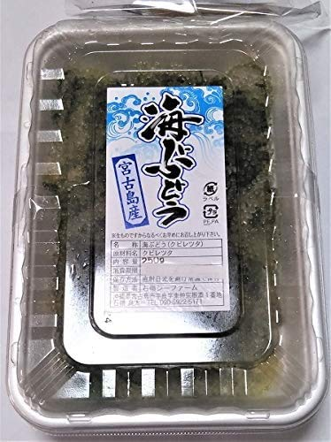 宮古島産 海ぶどう 宮古島直送 採れたて新鮮! (250g×2パック) 500g 海ぶどうのタレ付き (シークワーサー果汁入り)