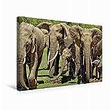 CALVENDO Lienzo de 45 cm x 30 cm Horizontal, un Motivo del Calendario de Elefantes Wildlife en Kenia, Imagen sobre Bastidor, Imagen Lista para Usar Animal Animales