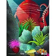 Il-grande-libro-degli-animali-marini-pi-grandi-Il-piccolo-libro-degli-animali-marini-pi-piccoli-Ediz-a-colori