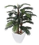 Closer2Nature Kunstpflanze/künstliche Betelpalme, Baum, Grün