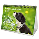 Welpenzauber DIN A5 Tischkalender 2020 Hunde Welpen - Seelenzauber