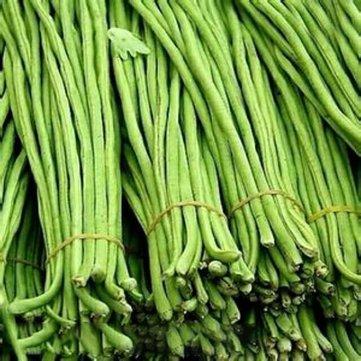 Generic Générique Vigna Sinensis Seeds Garden Farm Plantation de graines de haricots verts de légumes longs -20Pcs / Pack