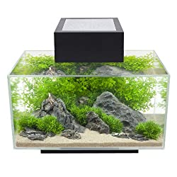 How to choose the best betta fish tanks earth 39 s friends for Large betta fish tank