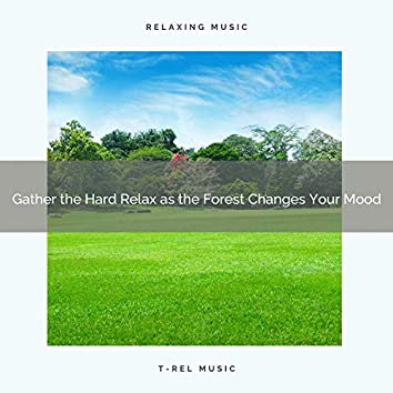 2020 Best: Gather the Hard Relax as the Forest Changes Your Mood