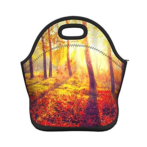 ADONINELP Bolsa de almuerzo con aislamiento para mujeres, hombres, árboles de otoño y hojas en los rayos del sol, bolso de mano con aislamiento térmico resistente al agua, lonchera, enfriador de alim