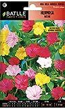 Semillas de Flores - Hermosa Noche variada - Batlle