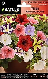 comprar comparacion Semillas de Flores - Petunia Péndula de los Balcones - Batlle