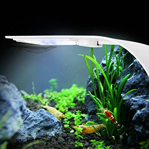 IC INSTANT COACH 10W Super Slim Aquarium Fish Tank 5730 LED Light Clip-on Lamp Aquatic Plant Lighting (White Body White+Blue Light)
