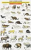 Mac's Field Guide to Yellowstone & Grand Teton National Parks: Birds & Mammals