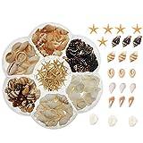 yaokan 1 Box Mini Small Seashell Natural Sea Shells Clam Starfish for Resin Jewelry Making DIY Craft Home Decor Vase Fillers Candle Making
