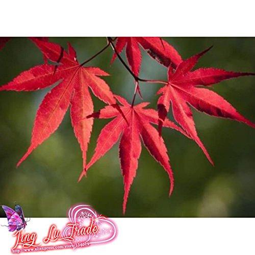 Les meilleures ventes! 50 semences / Paquet Parfum principal Lily Seed, 22 variétés de jardin Plantes Flower Seed Bonsai Lily Seed, # BX5M52