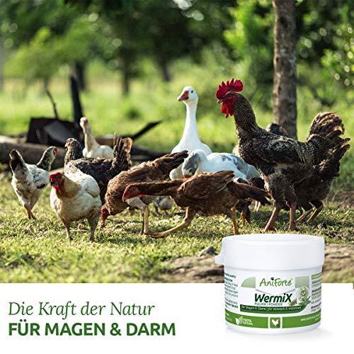 AniForte WermiX Pulver für Hühner, Gänse, Enten und Großvögel 20g - Naturprodukt vor, während und nach Wurmbefall mit Saponine, Bitterstoffe, Gerbstoffe, Wermut, Naturkräuter harmonisieren Magen & Darm - 3