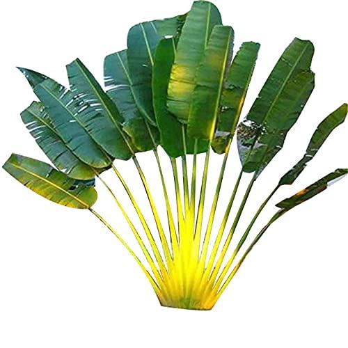 150 Stück Cycas-Samen Seltene tropische Zierpflanzen Mehrjährige immergrüne Pflanzensamen für Parterre-Samen