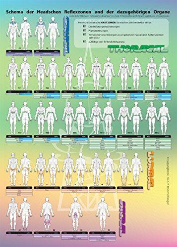 4-Elementeverlag Poster der Reflexzonen: die Headschen Körper-Zonen • die Organe