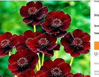 Best chocolate cosmos flower Reviews