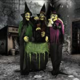 Haunted Hill Farm HHWITCH-15FLS Life-Size Animatronic Witches, Indoor/Outdoor Halloween Decoration, Color 14