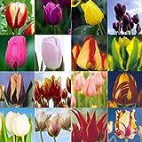 Kisshes Seeds- 50 PC Balcón Jardín Bonito Plantas de Bonsai Semillas de Bulbos de Tulipán (Multi)