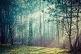 VLIES Fototapete-WALD-(2644s)-400x260 cm-Nebel Wolken