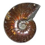 Ammonit Cleoniceras Fossil ca. 100 Millionen Jahre alt ca. 42-45 mm opalisierend -