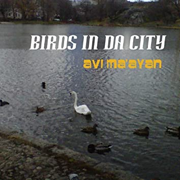 Birds in da City