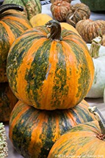 lady godiva pumpkin