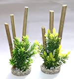 Sydeco Bamboo Plants