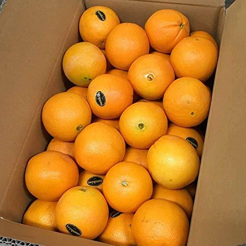 完熟 オレンジ 約8kg(36〜53玉) ネーブル バレンシア 果物 フルーツ 「北海道・沖縄は 1100円」