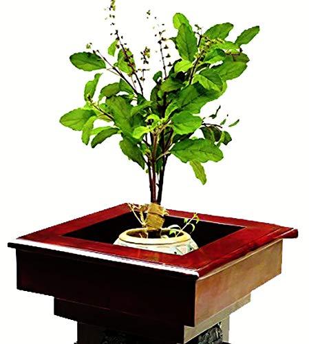 FERRY Bio-Saatgut Nicht nur Pflanzen: 0 Seeds: Tulsi Samen, Heing SIL, Ocimum Sanctum, Holy SIL, Tulasi Seeds