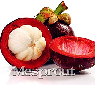 20pcs. Seeds Rare House Purple Mangosteen Tropical Fruit Exotic Garden Garcinia