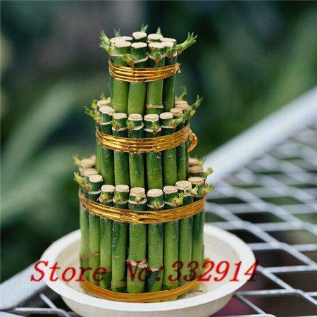 Hot Vente! 100pcs / sac rares chinois chanceux Graines de bambou 20 variétés Bonsaï Graines Plantes Jardin Novel Anti-Radiation