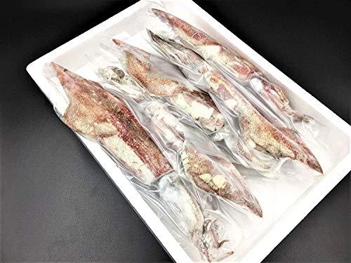 浜田港 ケンサキイカ 丸 1kg プロトン凍結 山陰沖 白いか 身が柔らかく 甘さみが強い 刺身にぴったり