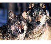 大人の子供パズル-オオカミ1000ピースパズル-クラシックパズル-3D-ブレインチャレンジ-2つの灰色のオオカミパズル