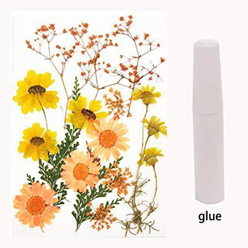 FICI Retro Gedroogde Bloem Glas Decoratieve Metalen Fotolijst Creatieve DIY Plant Specimen Fotolijst Woonaccessoires, E (zonder frame)