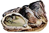 宮崎県産 幸徳丸の細島岩牡蠣(生食) お試しセット 合計9個(LL3個・L3個・M3個)☆3年以上育てた様々なサイズを食べ比べ!!