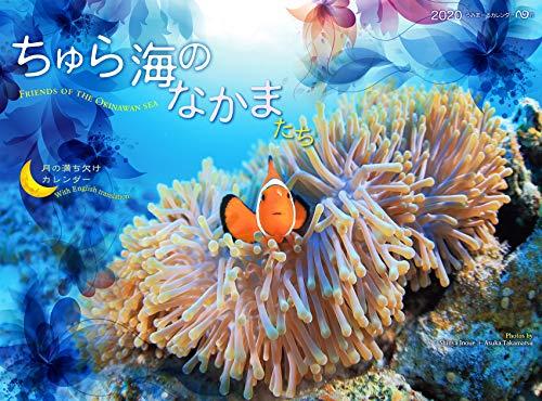 2020うみまーる中判ムーンカレンダー `ちゅら海のなかまたち?Friends of the Okinawan sea' (月の満ち欠け)