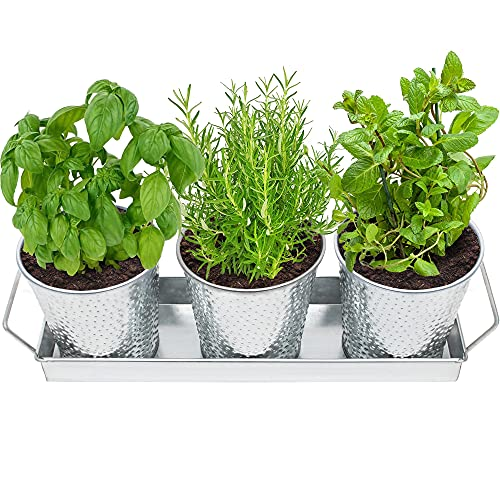 Saratoga Home Herb Pots with Tray Set - Indoor Windowsill Galvanized Planters with Drainage Holes
