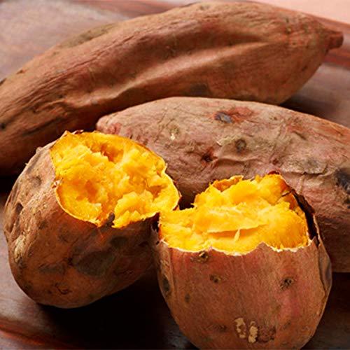 鹿児島県種子島産「訳あり安納芋」 2.5kg/5kg (2.5kg)