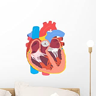 Human Heart Wall Decal by Wallmonkeys Peel and Stick Graphic (18 in H x 18 in W) WM271410