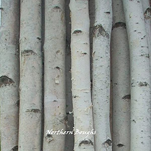 Six Medium White Birch Poles 8 Ft