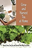 Grow and Harvest Tea at Home: How to Grow, Care for, and Harvest Your Own Tea Garden: Grow Tea Guide