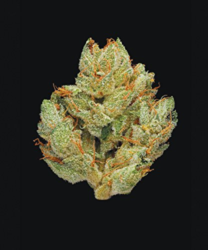 51kku6oZlgL - Green: A Field Guide to Marijuana: (Books about Marijuana, Guide to Cannabis, Weed Bible)