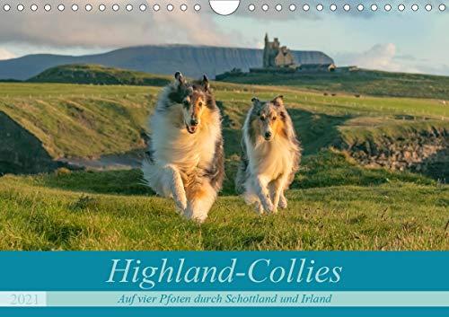 Highland-Collies - Auf vier Pfoten durch Schottland und Irland (Wandkalender 2021 DIN A4 quer)