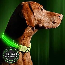 Best Puppy Collars - Wahl des richtigen Modells für Ihren Welpen