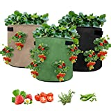 Nicheo 3 Pcs Strawberry Planting Bags, Planter Pot with Handles and Visualization Pockets, Garden Planting Grow Bags for Strawberry and Other Plant. Breathable Nonwoven Fabric Cloth (10 Gallon)