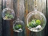 Weanty Colgante Planta de vidrio Florero Adorno navideño Luz Candelabro Titular de adornos de árbol de Navidad rellenables claros (3 paquetes)