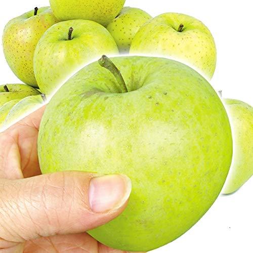 国華園 青森産 ちび王林 10�s 1組 りんご