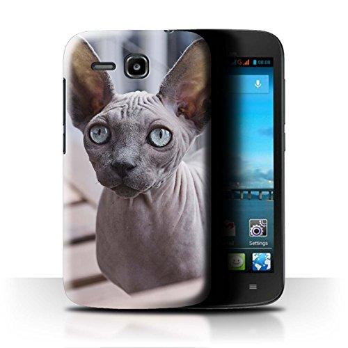 Stuff4 Hülle/Hülle für Huawei Ascend Y600 / Sphynx Katze Muster Katze/Katzenrassen Kollektion