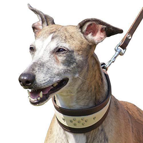 Dingo Weiches Lederhalsband für Windhund Eleganz Halsband Soft 12402